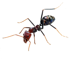 insects&Ants png image.