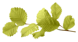 nature&Autumn leaves png image.