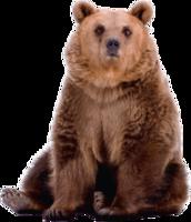animals & bear free transparent png image.