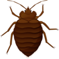insects&Bed bug png image.