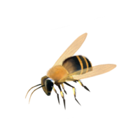 insects&Bee png image.