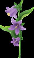 flowers&Bellflower png image.