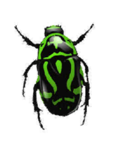 insects&Bugs png image.