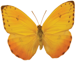 insects&Butterfly png image.