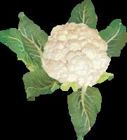 vegetables&Cabbage png image.