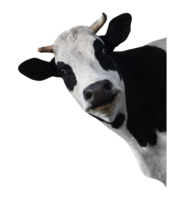 animals&Cow png image.
