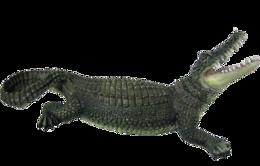 animals&Crocodile png image.