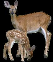 animals&Deer png image.