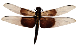 insects&Dragonfly png image.