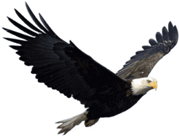 animals&Eagle png image.