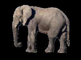 animals&Elephants png image.