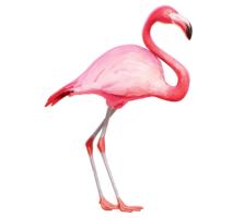 animals&Flamingo png image.