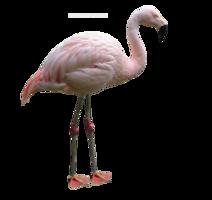 animals & flamingo free transparent png image.