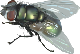 insects&Fly png image.
