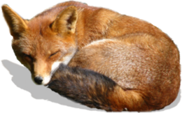 animals&Fox png image.