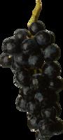 fruits&Grape png image.