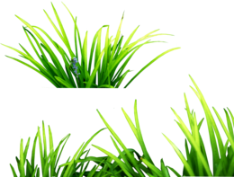 nature&Grass png image.