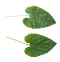 nature&Green leaves png image.