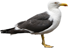 animals&Gull png image.