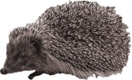Hedgehog&animals png image
