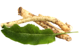 vegetables&Horseradish png image.