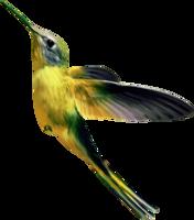 animals&Hummingbird png image.