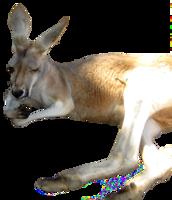 animals&Kangaroo png image.