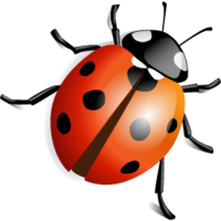 insects&Ladybug png image.