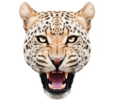 animals&Leopard png image.