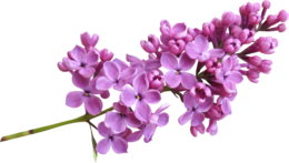 flowers&Lilac png image.
