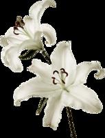 flowers&Lilium png image.