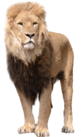 animals&Lion png image.