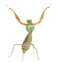 insects&Mantis png image.