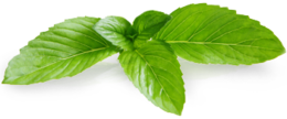 nature&Peppermint png image.