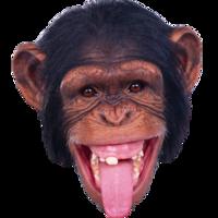 animals&Monkey png image.