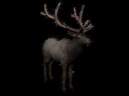 animals&Moose elk png image.