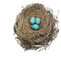nature&Nest png image.