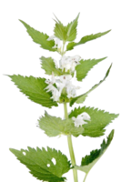 nature&Nettle png image.