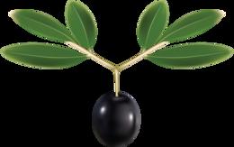 Olives&vegetables png image