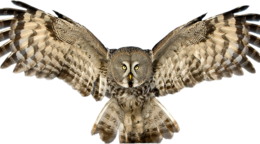 animals&Owls png image.