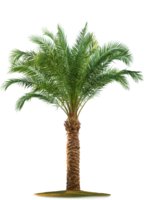 nature&Palm tree png image.