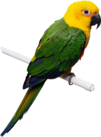 animals&Parrot png image.