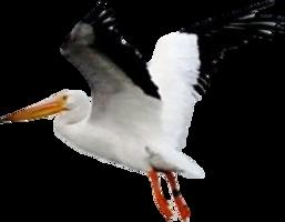 animals&Pelican png image.