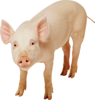 animals&Pig png image.