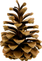nature&Pine cone png image.