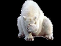 animals&Polar bear png image.