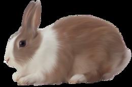 animals&Rabbit png image.