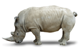 animals&Rhino png image.