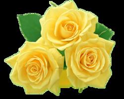 flowers & rose free transparent png image.