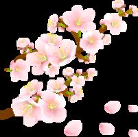 nature&Sakura png image.